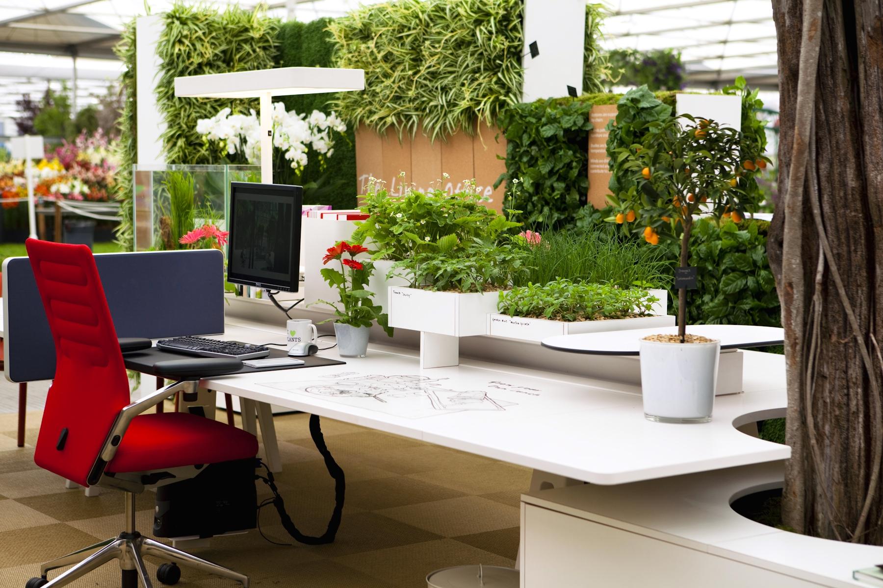 Office plants - eOffice